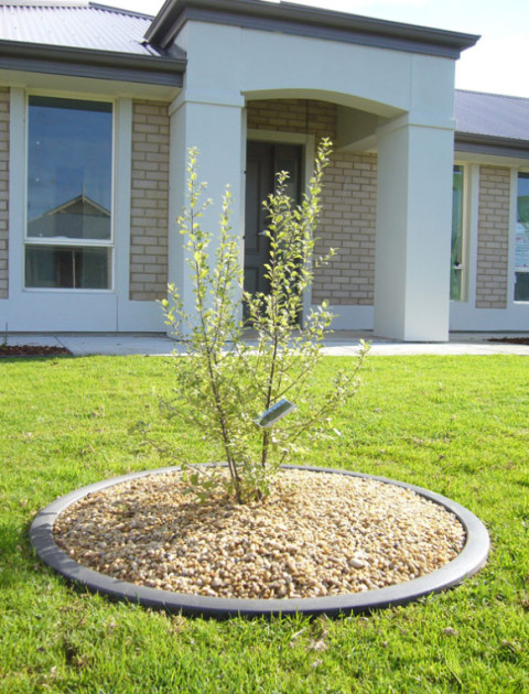 Tree Surrounds WPC Round Edging